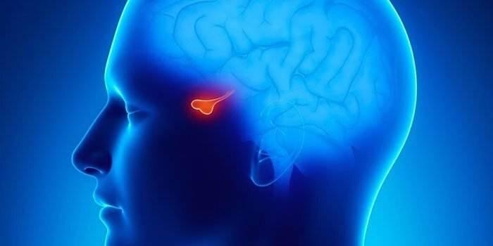 3818081 ryru - Аденома и пролактинома гипофиза головного мозга