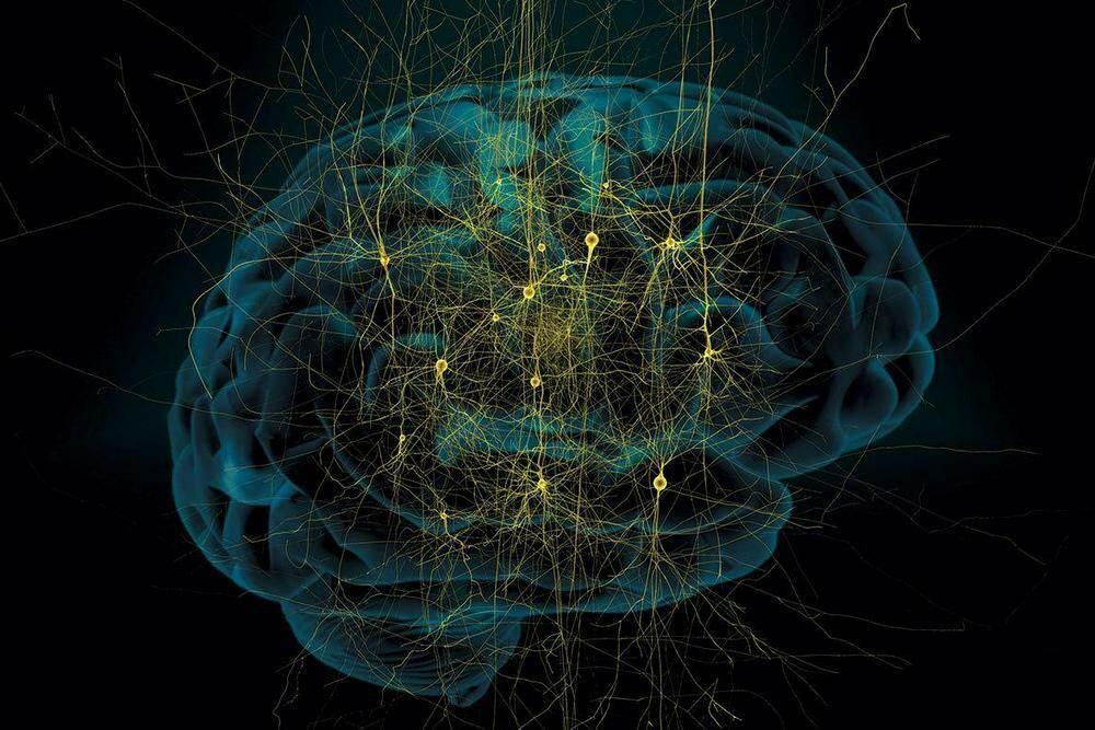d235a15a3c6e954564cd44259106efe380795dd56ccb3cee6432f864a248f2a6 facebook - Что такое вегетативная нервная система?