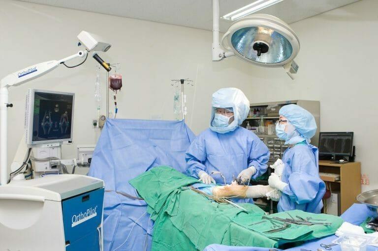 Стволовая терапия коленного сустава в Корее